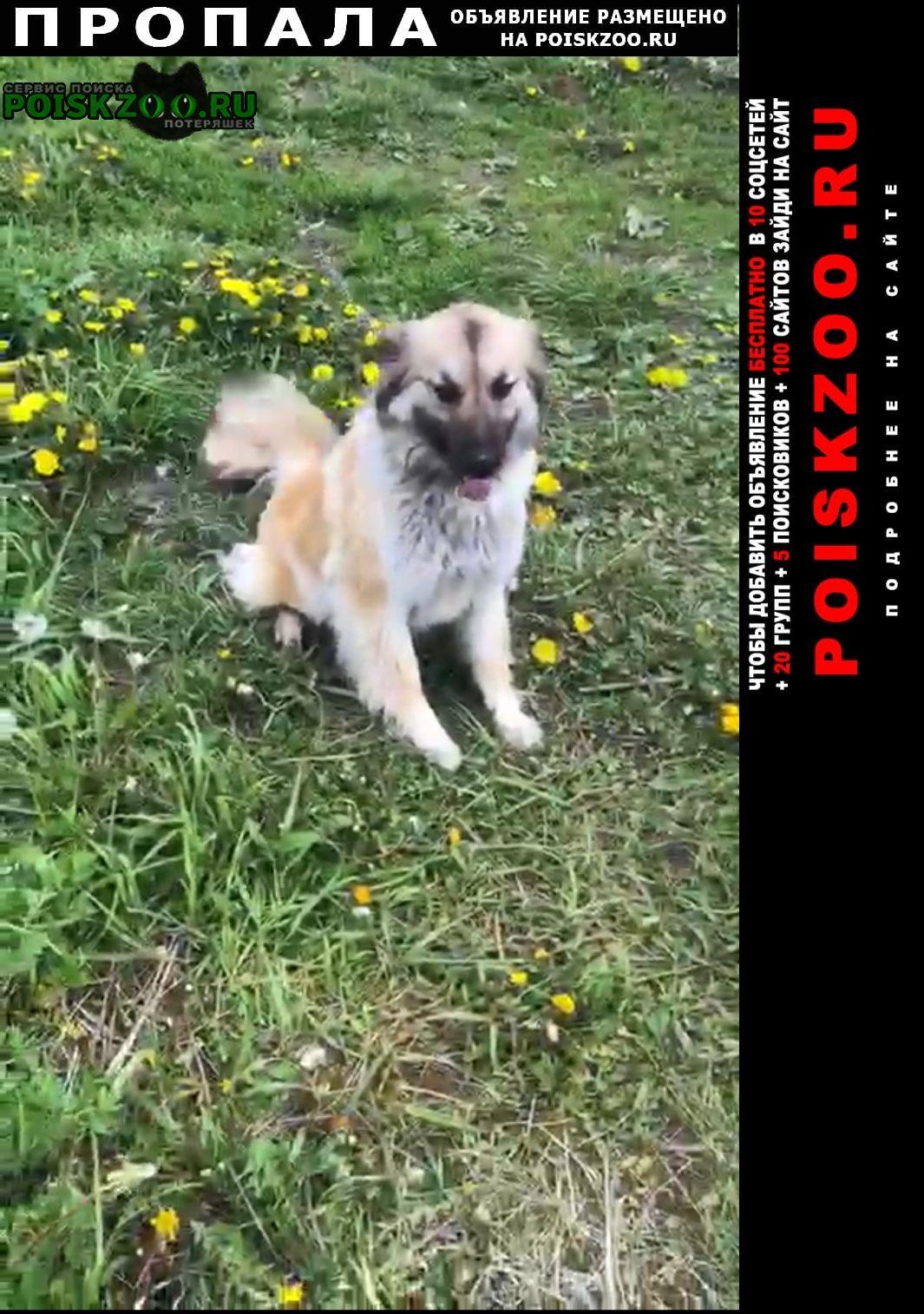 Пропала собака рыжая улыбчивая дворняжка Черноголовка