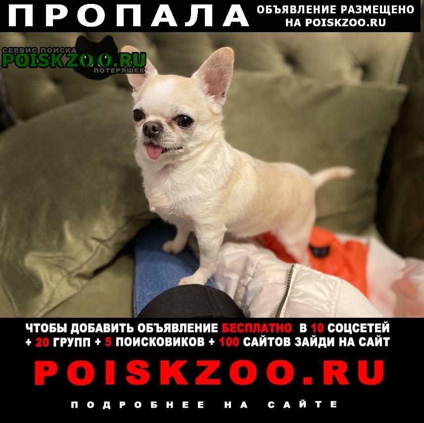 Евпатория Пропала собака кобель просьба найти, за вознаграждение