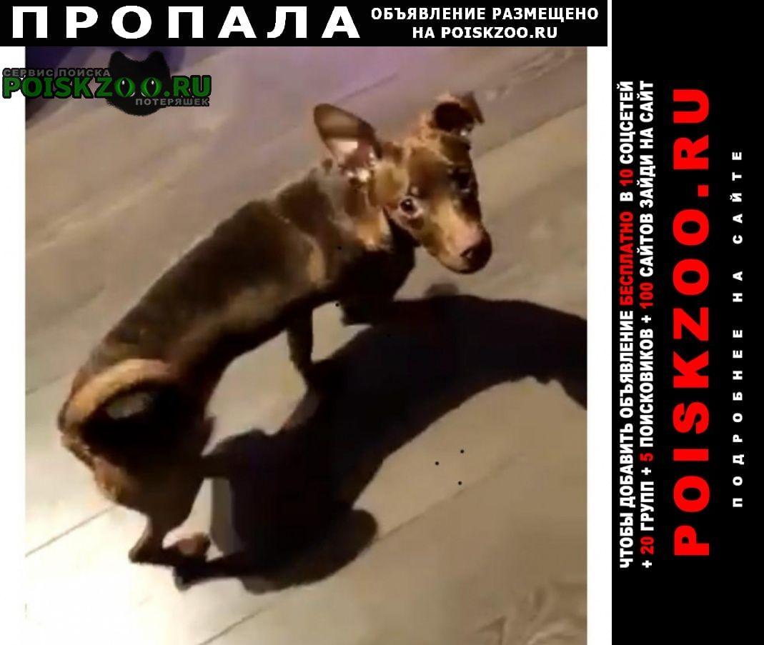Пропала собака китай-город, курская, чистые пруды Москва