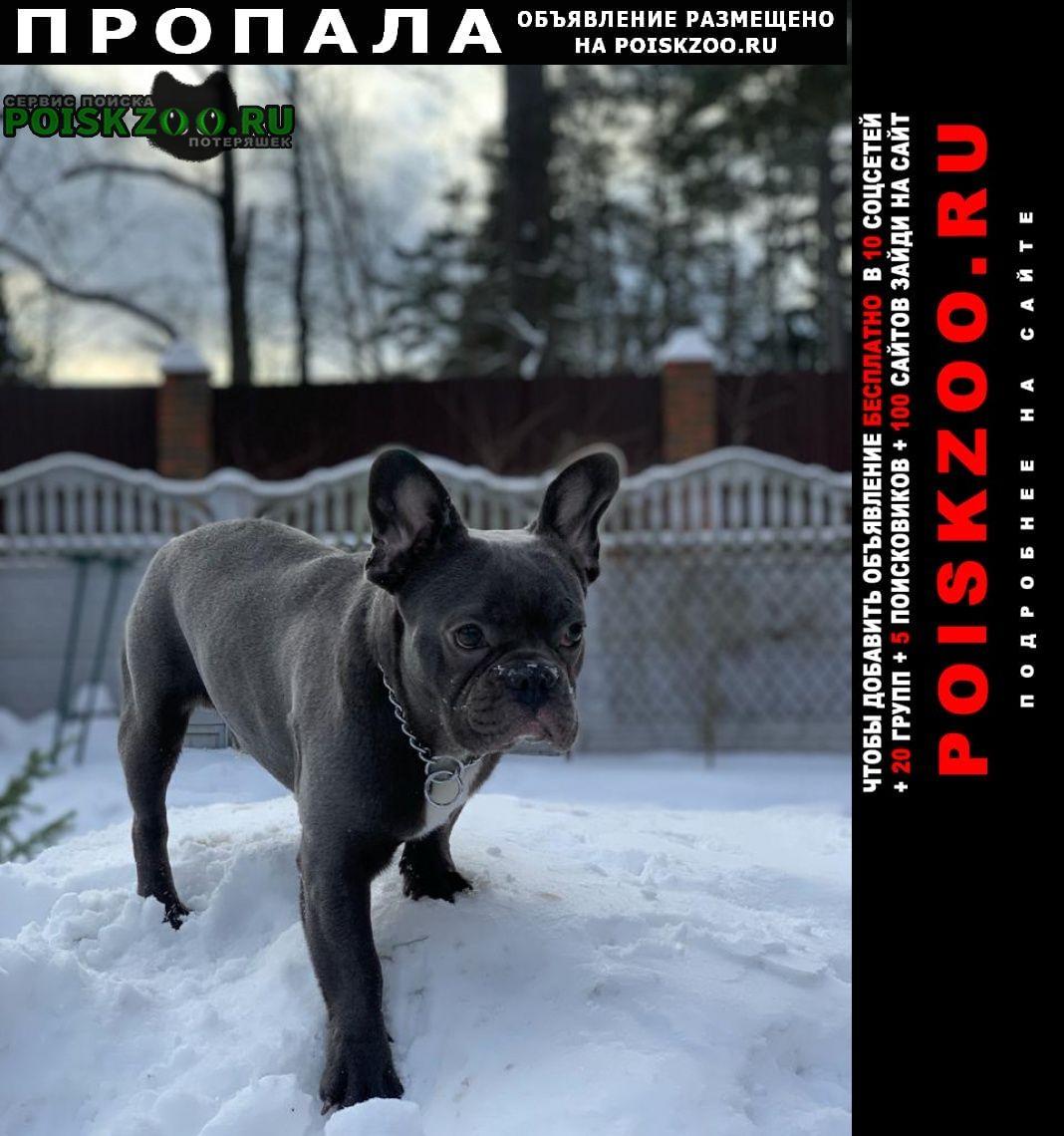 Пропала собака кобель 17.04 в заветы ильича Пушкино