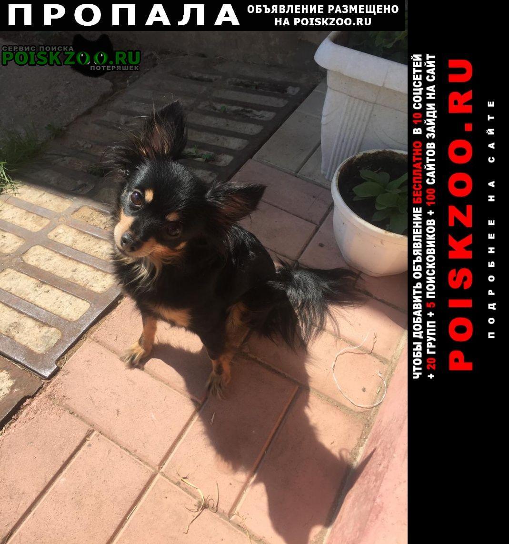 Красный Пропала собака помогите пожалуйста найти собаку