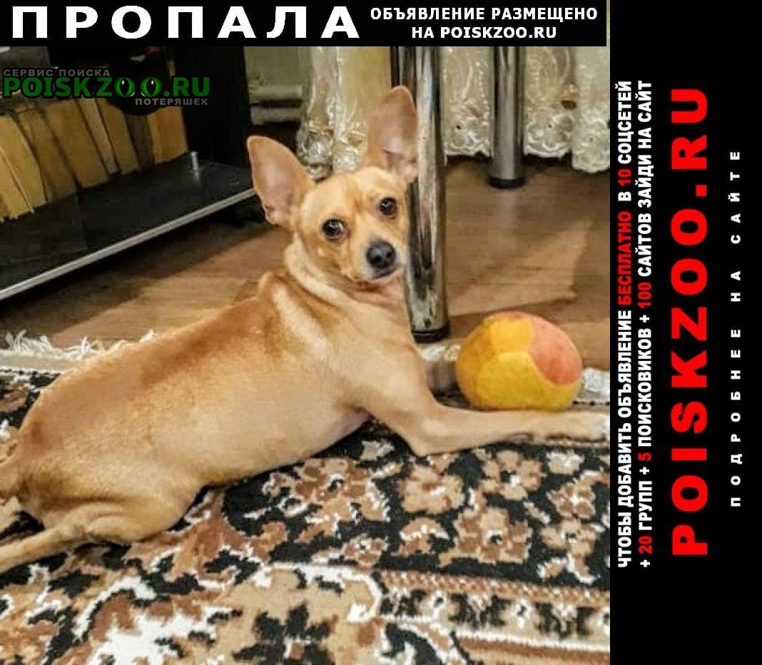 Волгоград Пропала собака кобель