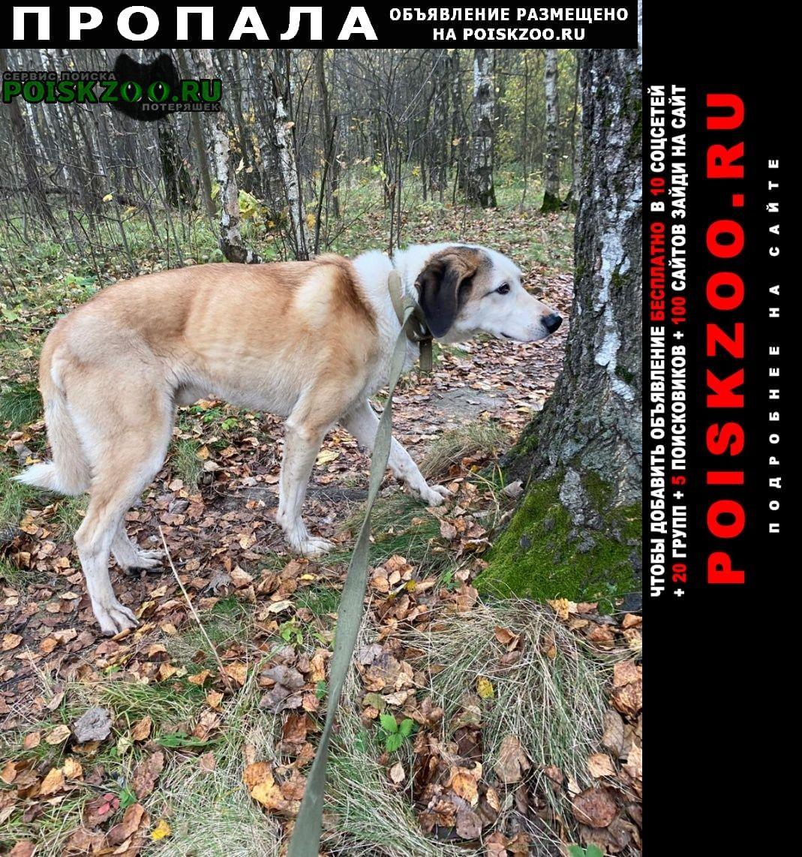 Нарофоминск Пропала собака кобель