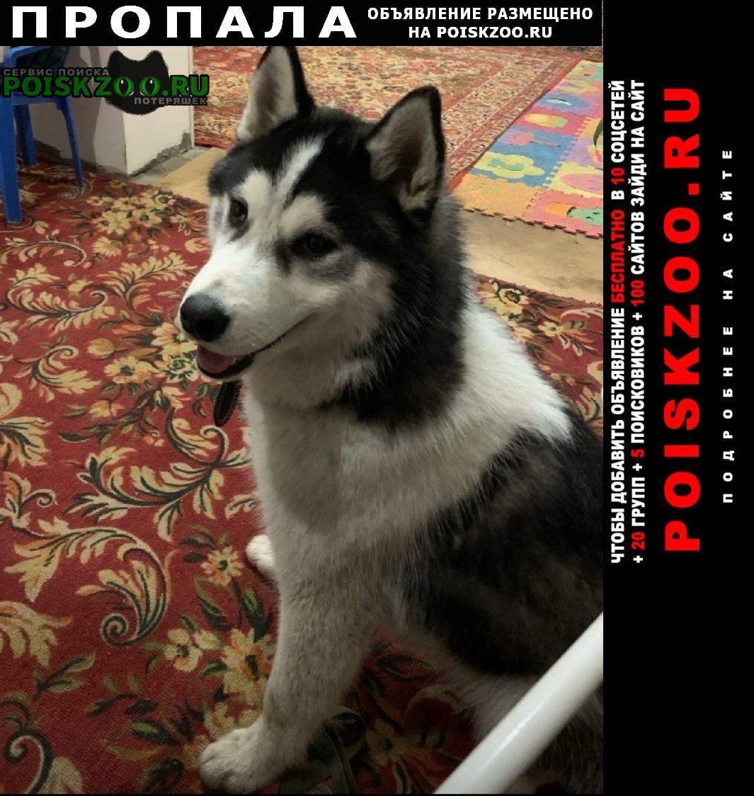 Астрахань Пропала собака кобель просим помощи за вознаграждение
