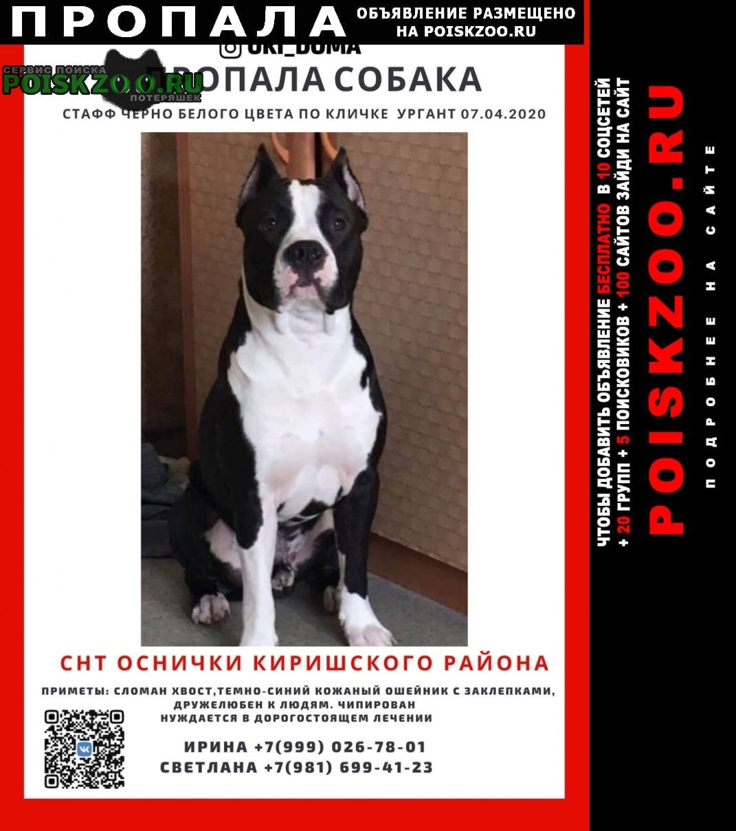 Пропала собака кобель вознаграждение Санкт-Петербург