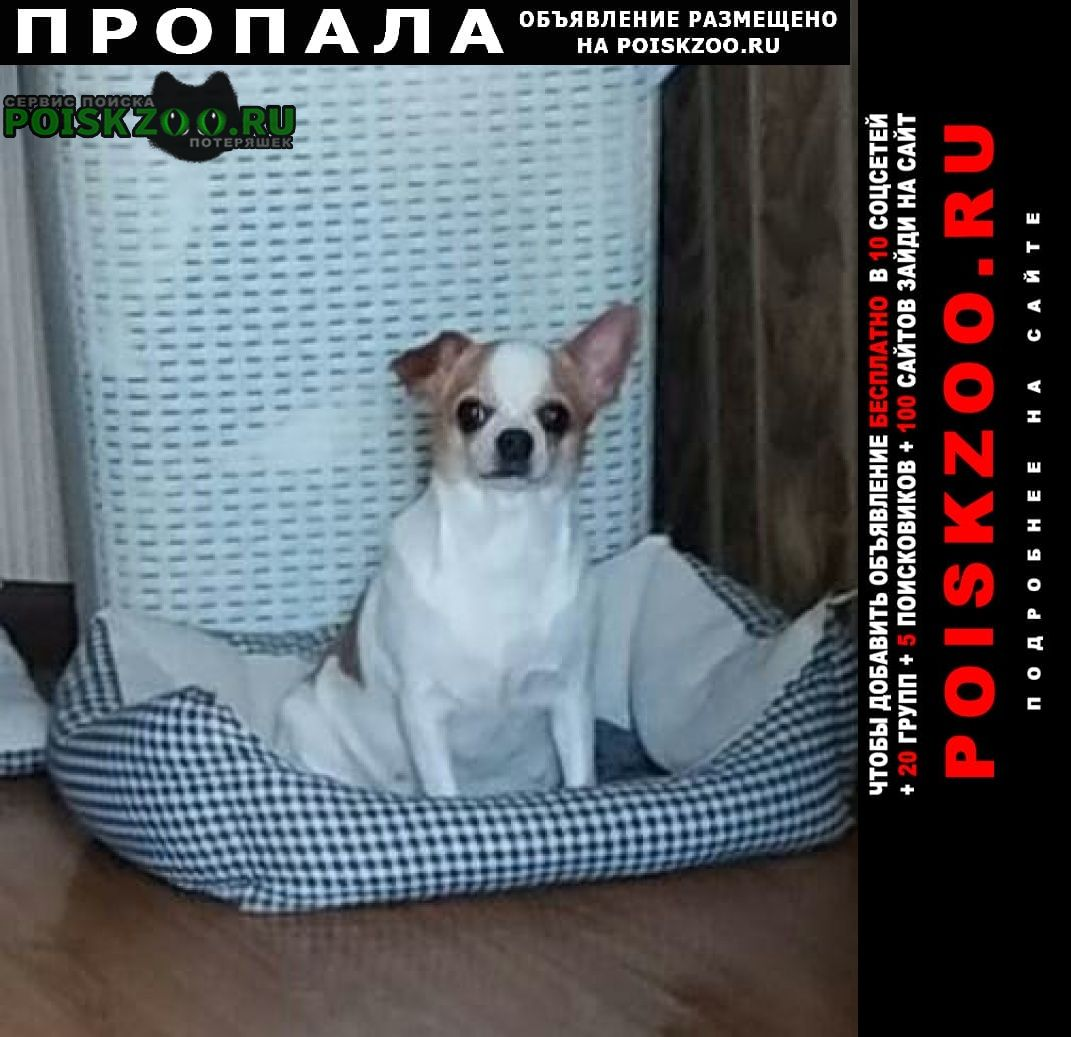 Пропала собака нашедшему вознаграждение Санкт-Петербург