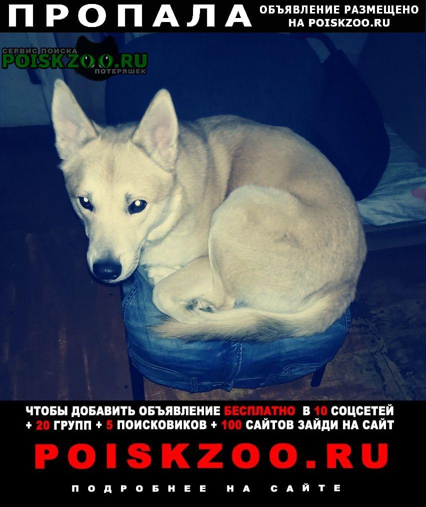Сергиев Посад Пропала собака кобель приметы длинные уши.