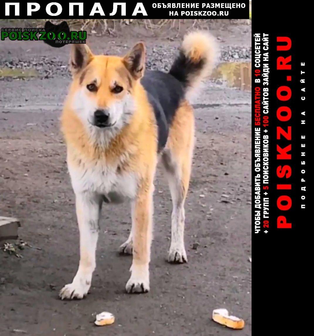 Пропала собака кобель ищем джека. Сургут