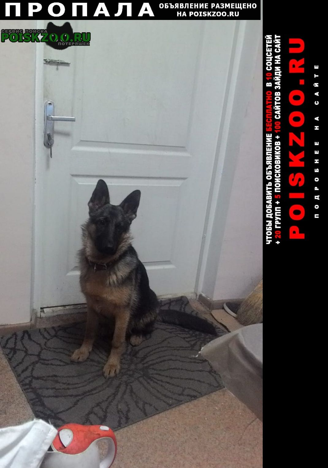 Пропала собака немецкая овчарка 7 месяцев Липецк