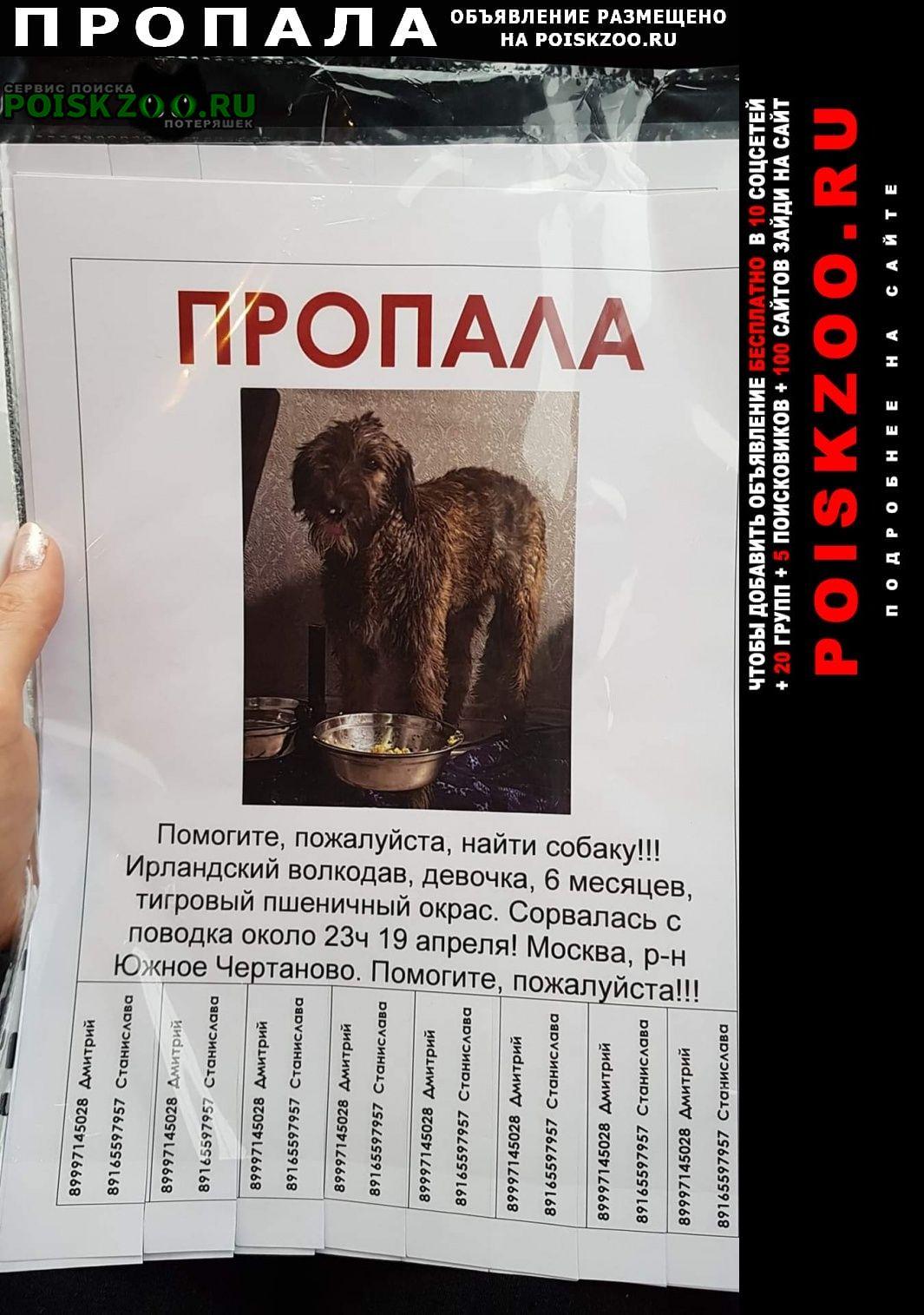 Пропала собака откликнитесь помогите найти Москва