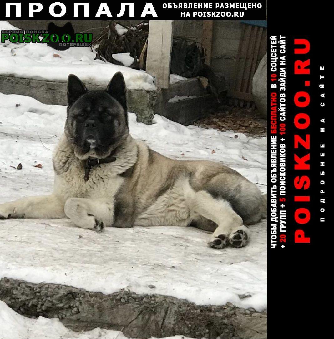Красноярск Пропала собака кобель