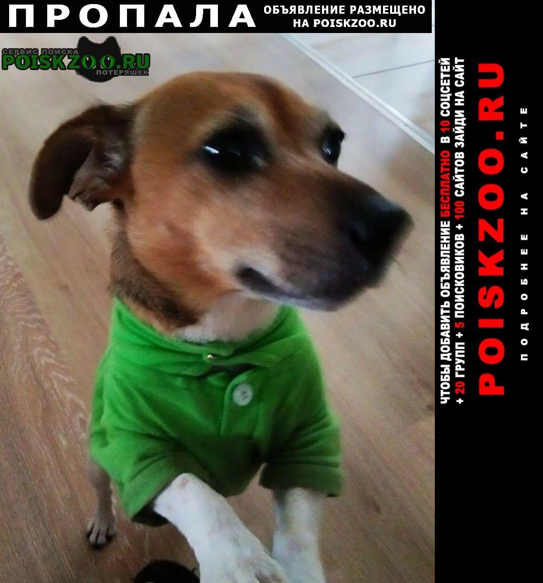 Пропала собака Пермь