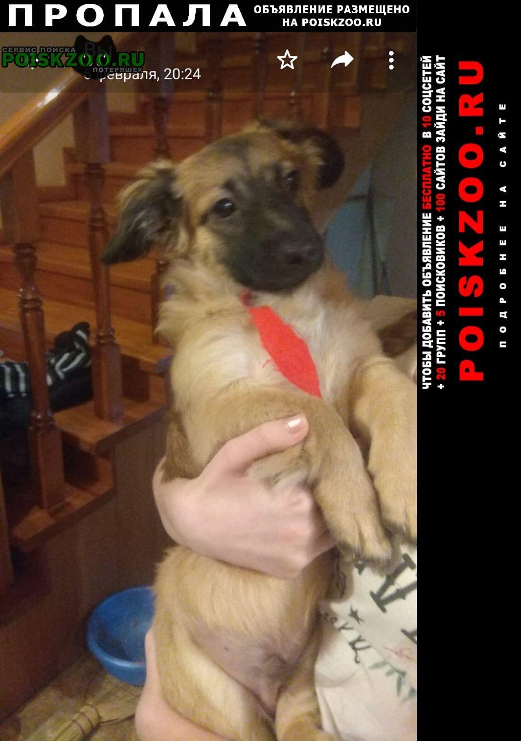 Гуково Пропала собака кобель кличка миша