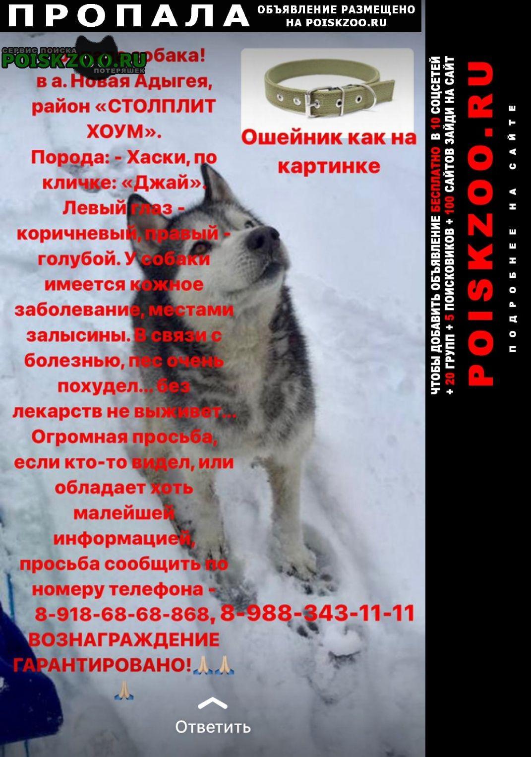 Пропала собака кобель хаски Краснодар