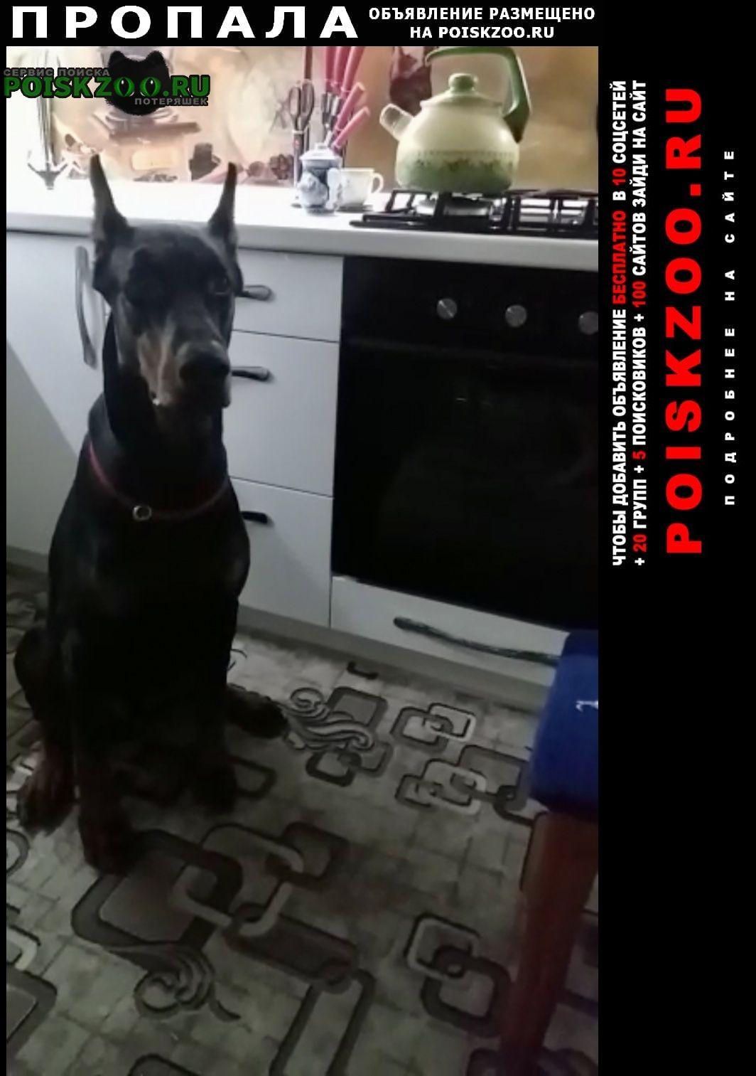 Пропала собака кобель доберман Орловский
