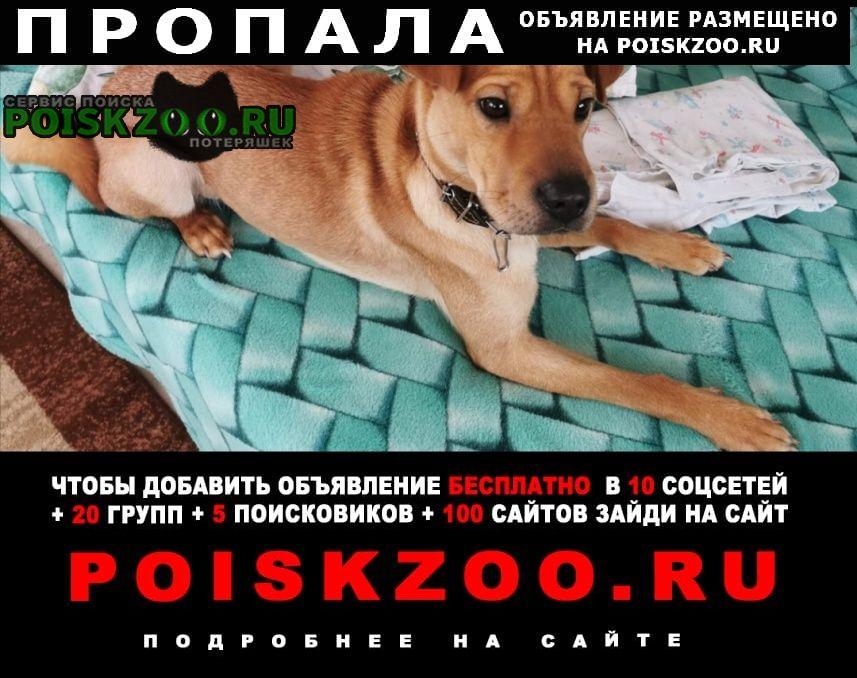 Казань Пропала собака