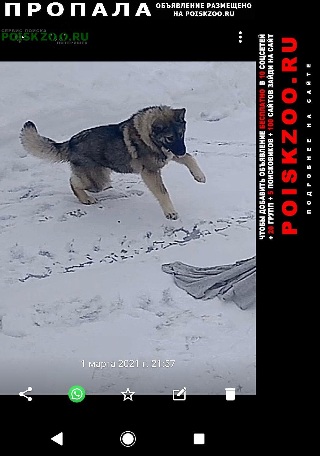 Истра Пропала собака кличка буля, 7 месяцев