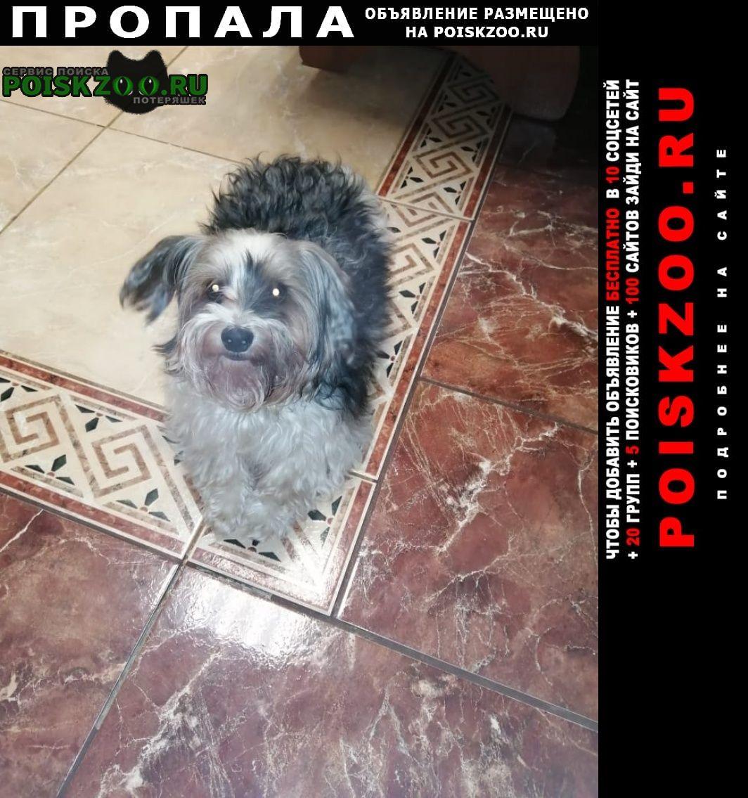 Пропала собака кобель бивер Люберцы
