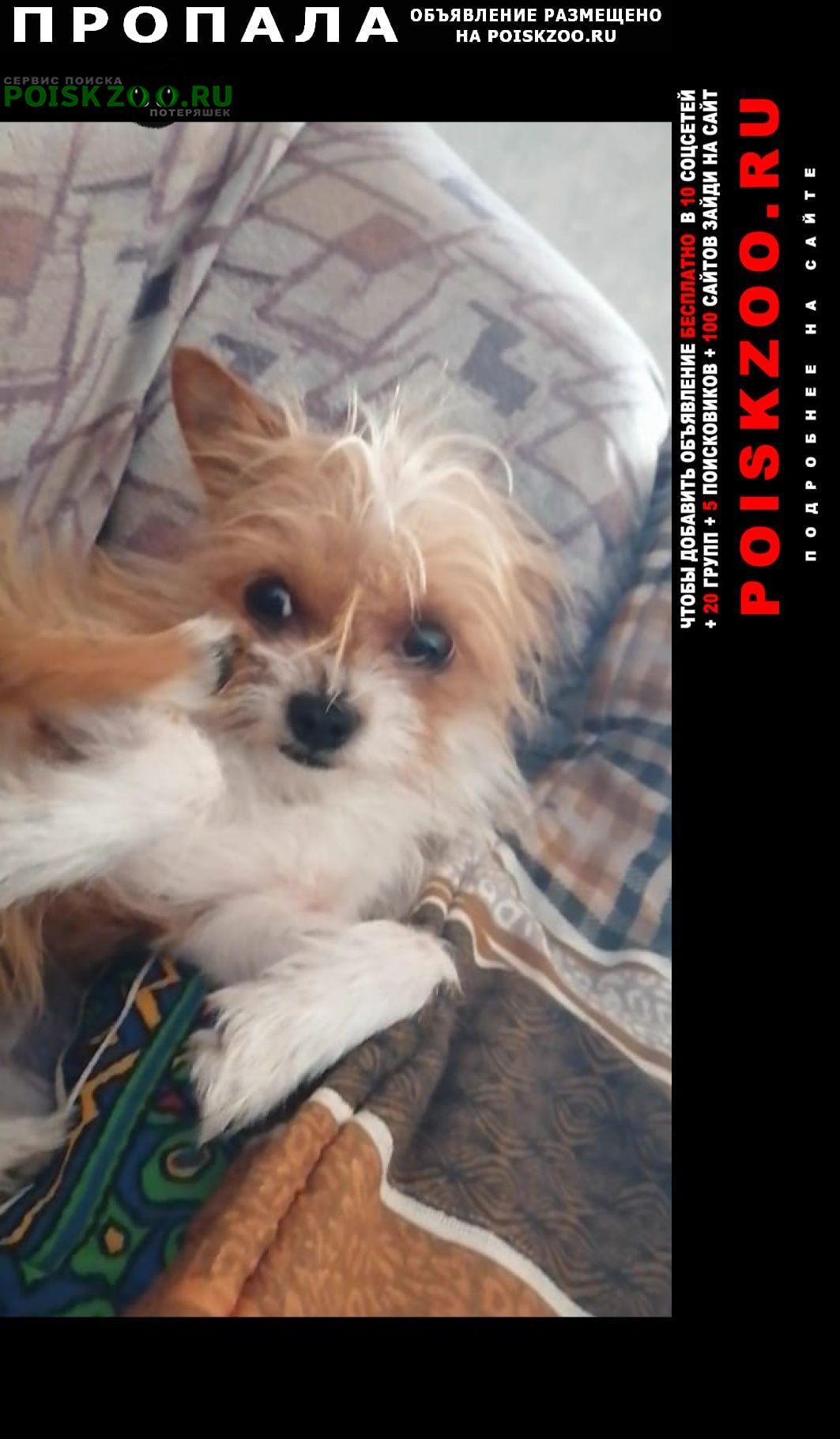 Пропала собака за любую информацию вознаграждение Барнаул