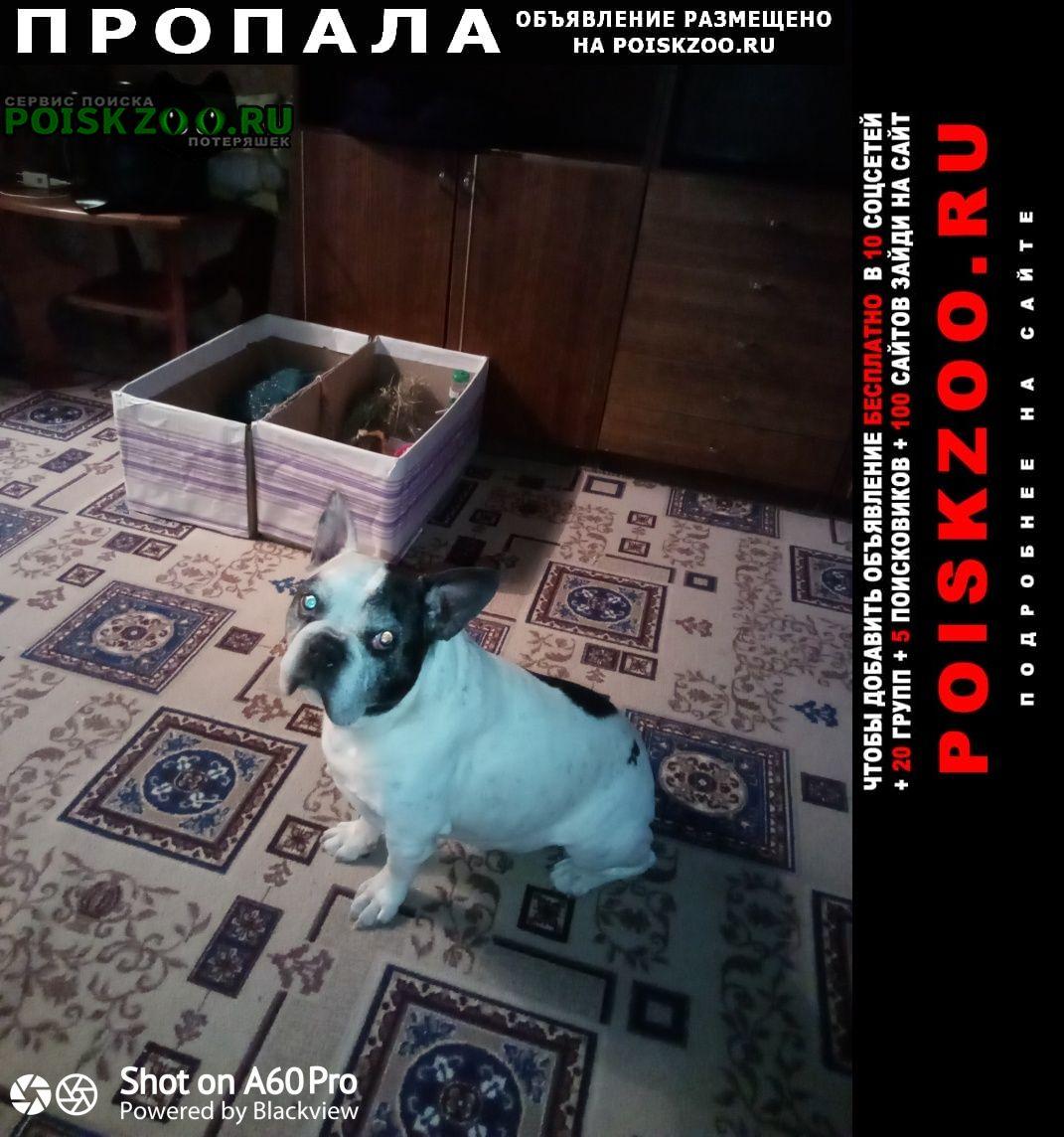 Железногорск Пропала собака кобель вывоз из в красноярск