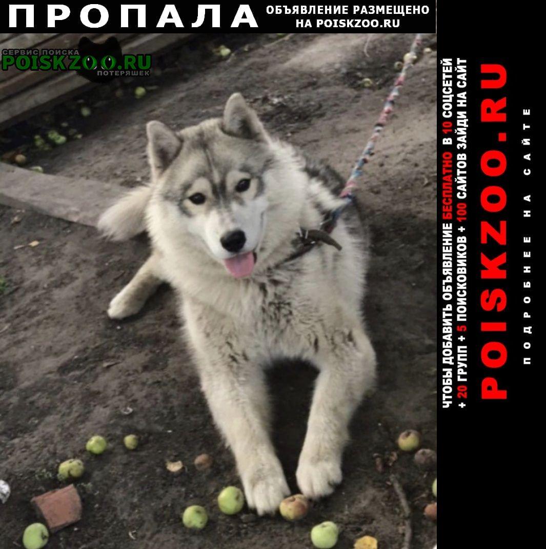 Пенза Пропала собака кобель убежала собаки