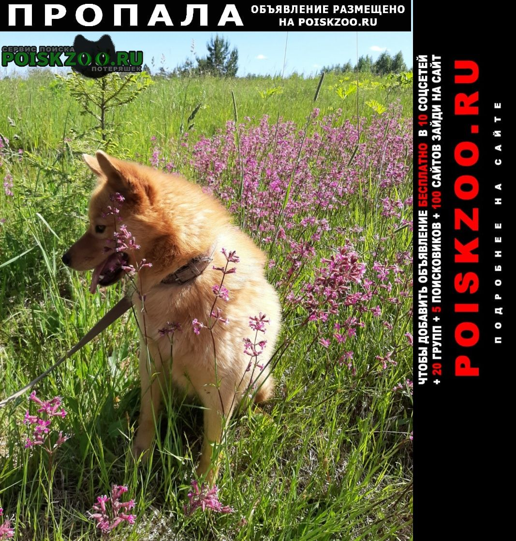 Пропала собака кобель карело-финкая лайка туули Волхов