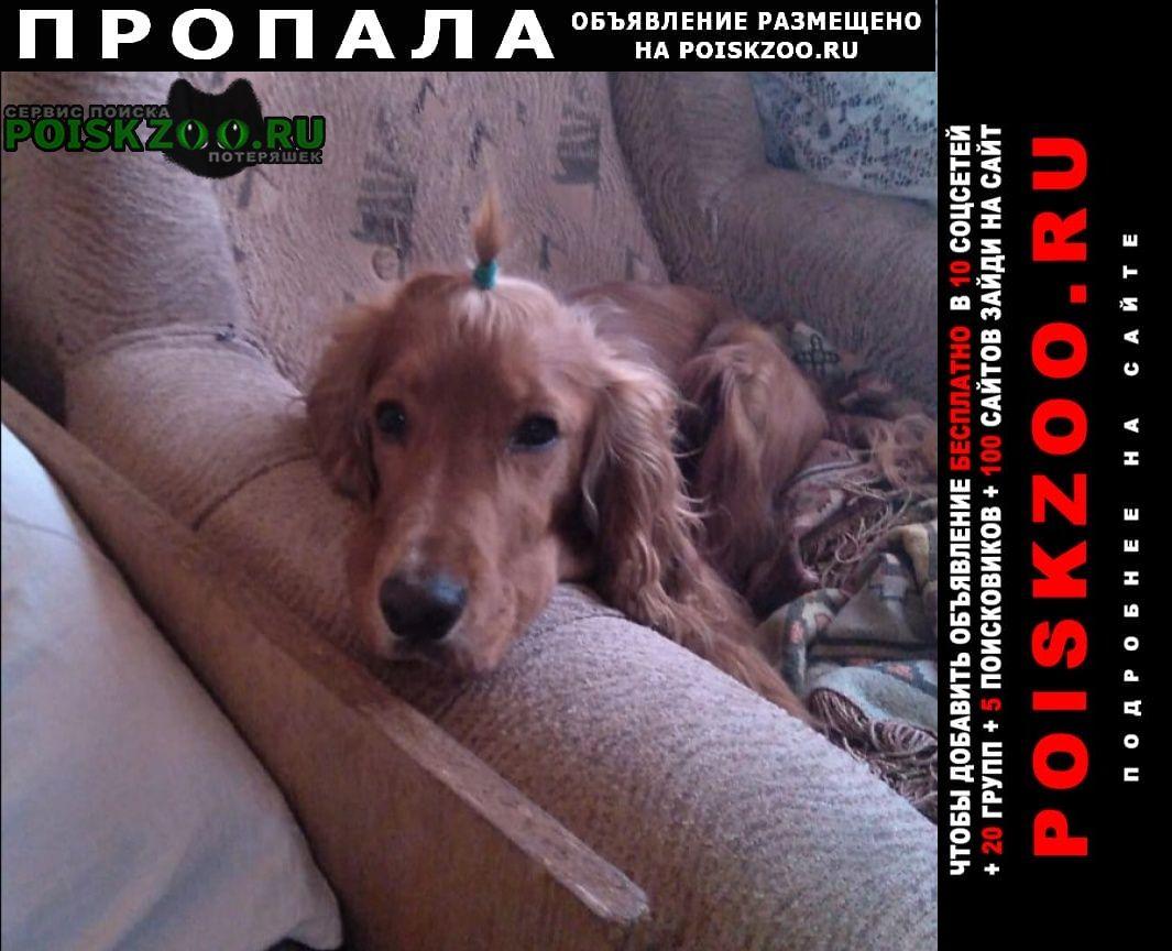 Голицыно (Московская обл.) Пропала собака кобель