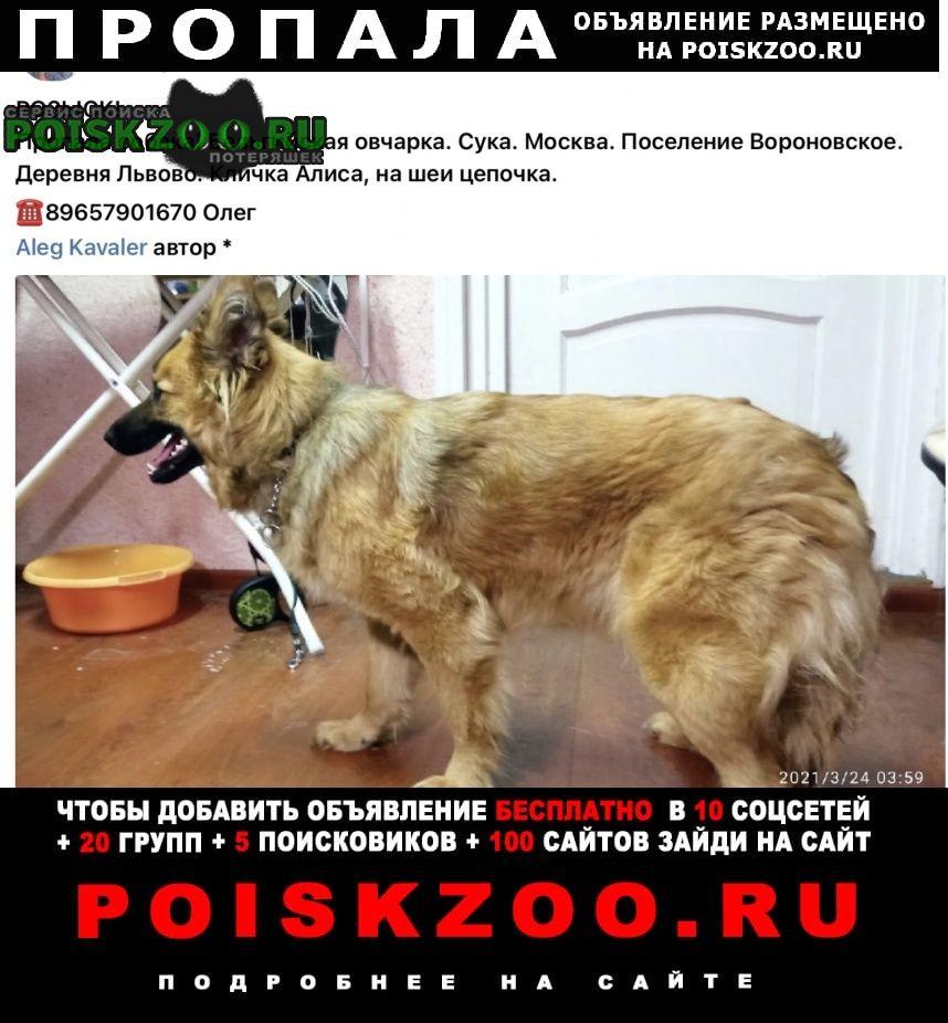Пропала собака друг Вороново