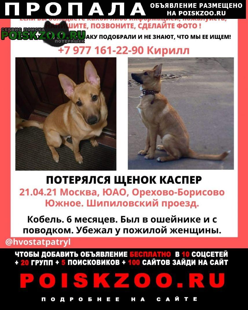 Пропала собака кобель кличка каспер, район орехово-борисово Москва