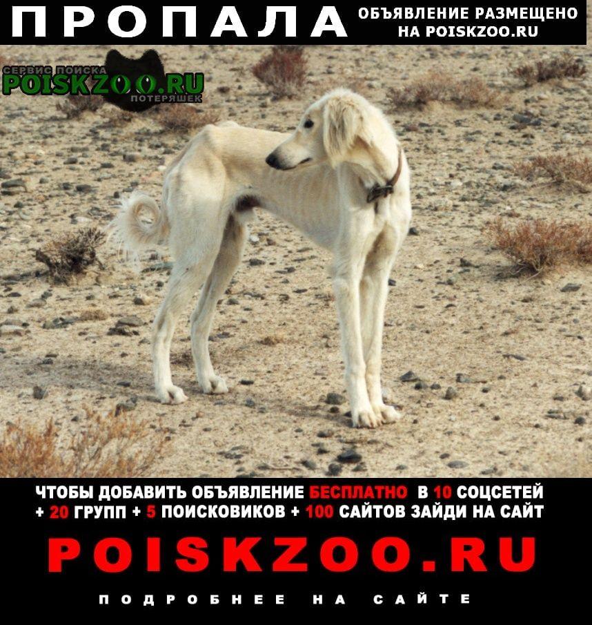 Пропала собака со двора частного дома. Бишкек