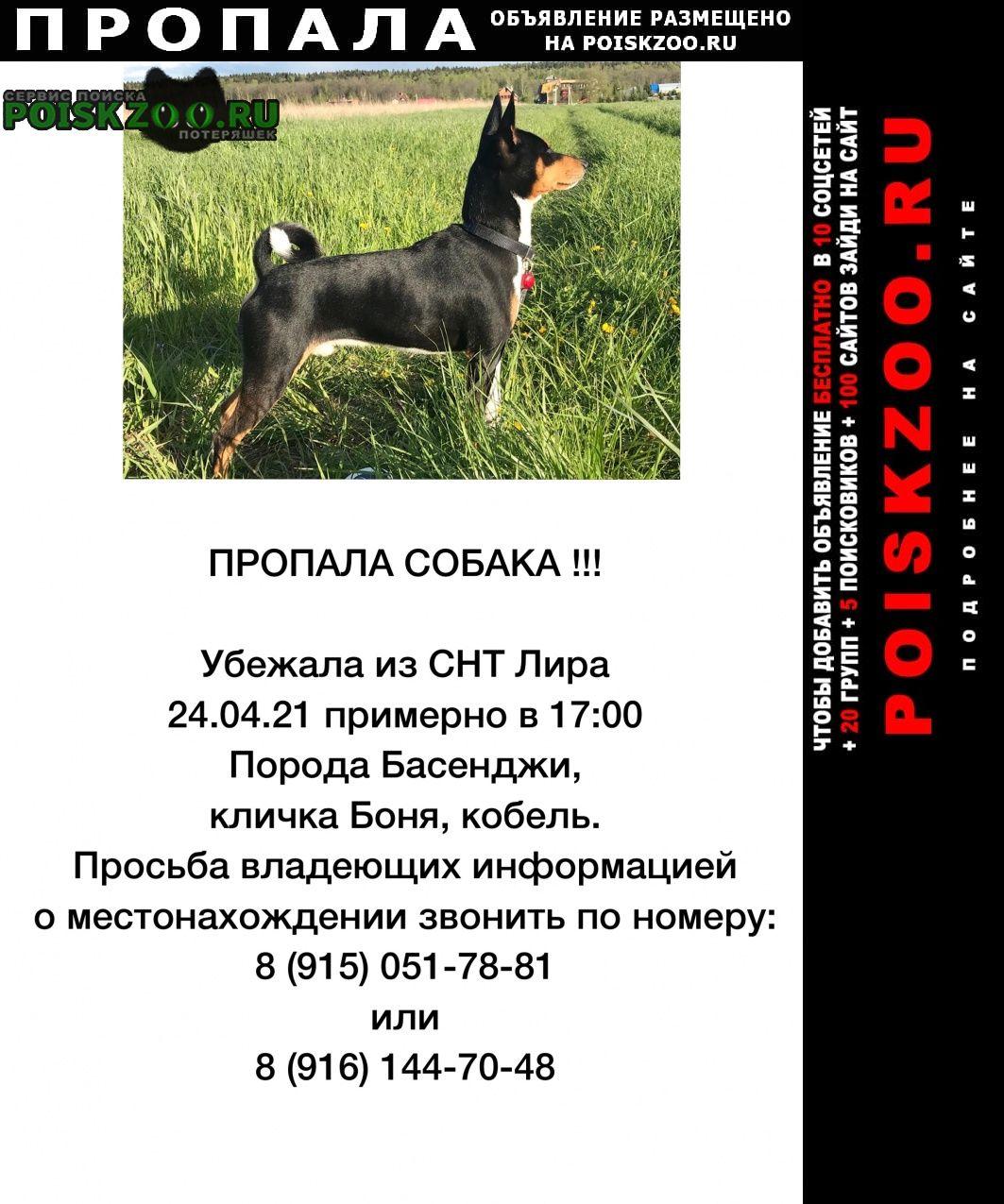 Пропала собака кобель Вороново