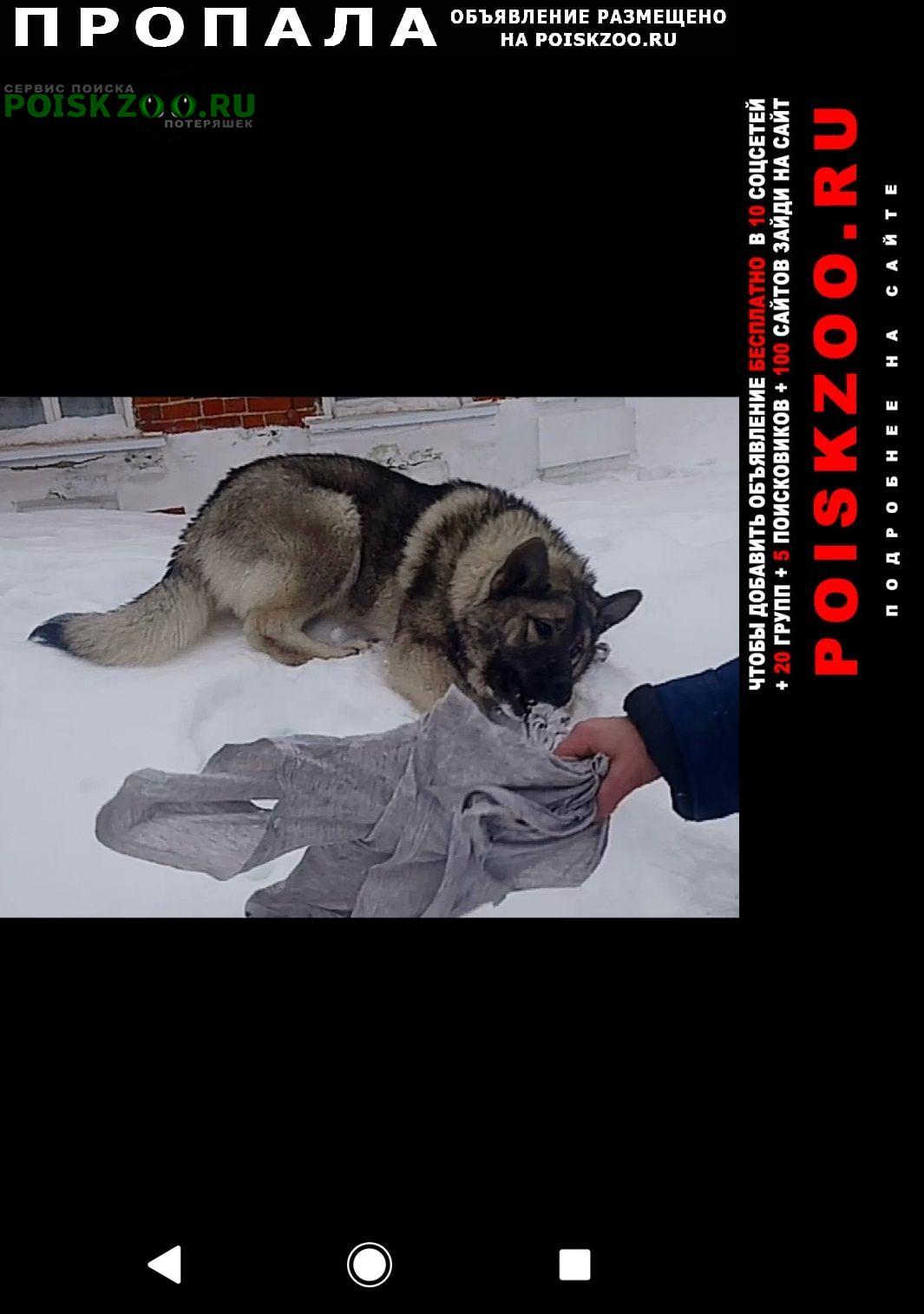 Пропала собака кличка буля, 7 месяцев Истра