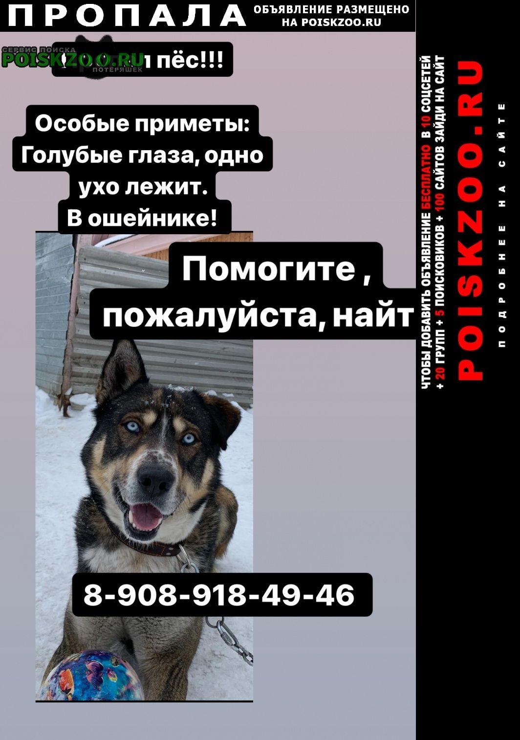 Екатеринбург Пропала собака кобель, голубые глаза, в ошейнике