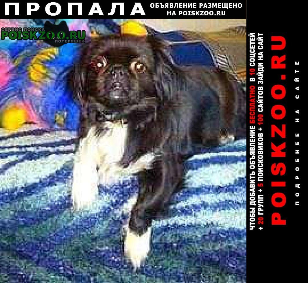 Макеевка Пропала собака японский хин, чёрно белая