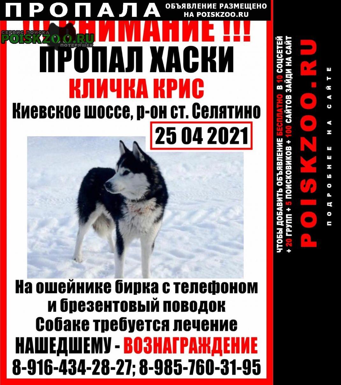 Пропала собака кобель Апрелевка