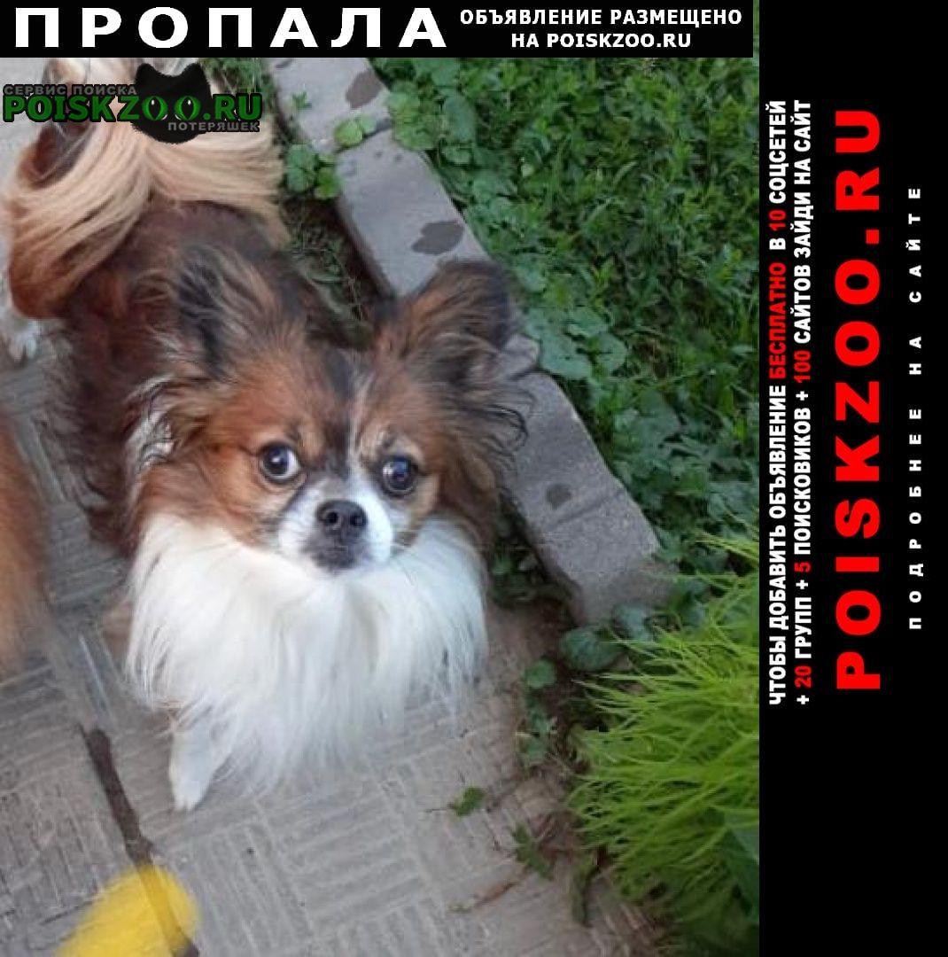 Ногинск Пропала собака кобель помогите найти друга