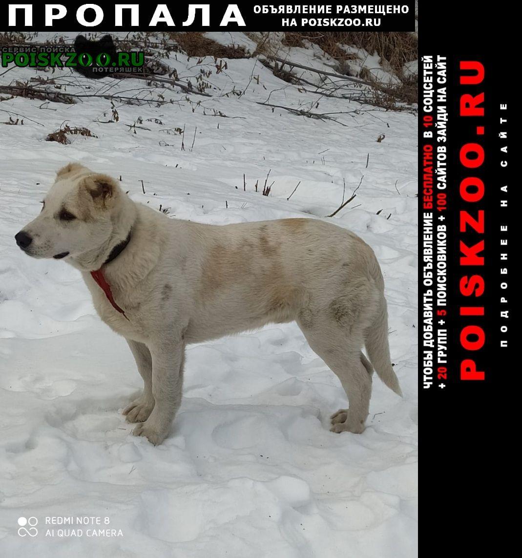 Пропала собака кобель Владикавказ