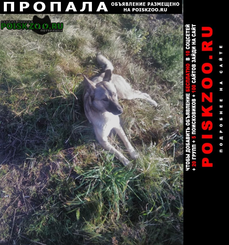 Лодейное Поле Пропала собака зовут найда, стерилизована, серо бежевая