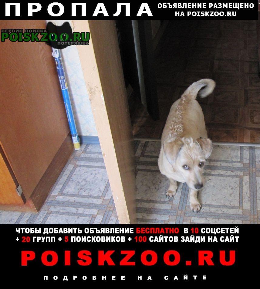 Пропала собака кобель собака Санкт-Петербург