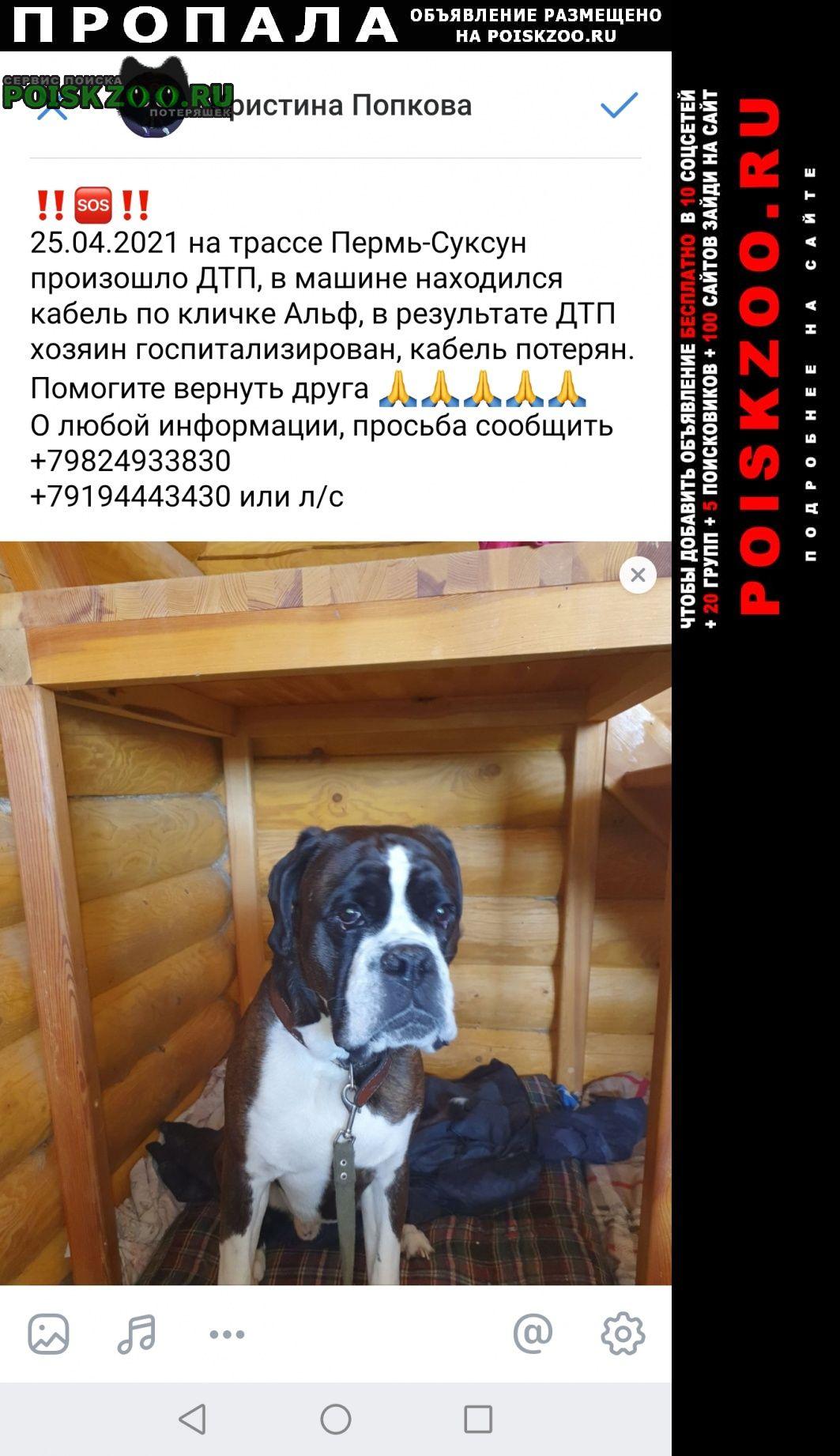 Пропала собака кобель Кунгур
