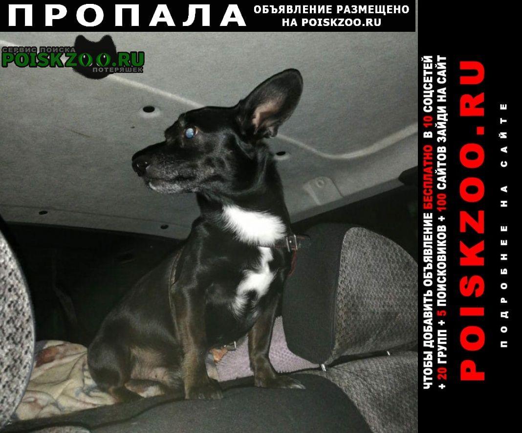 Пропала собака кобель Екатеринбург