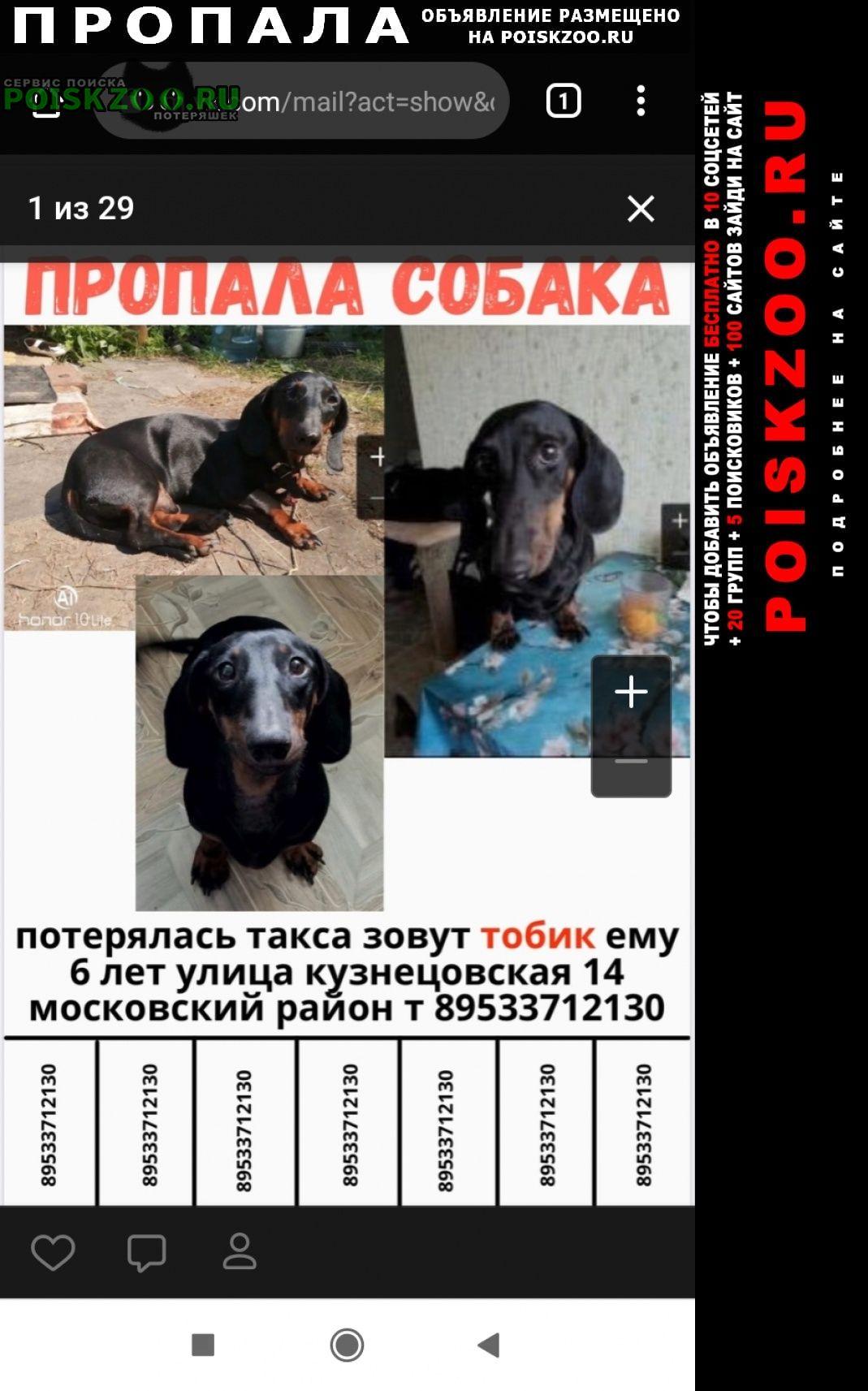 Санкт-Петербург Пропала собака кобель такса