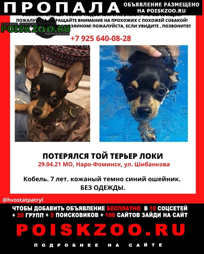 Пропала собака кобель локи Нарофоминск