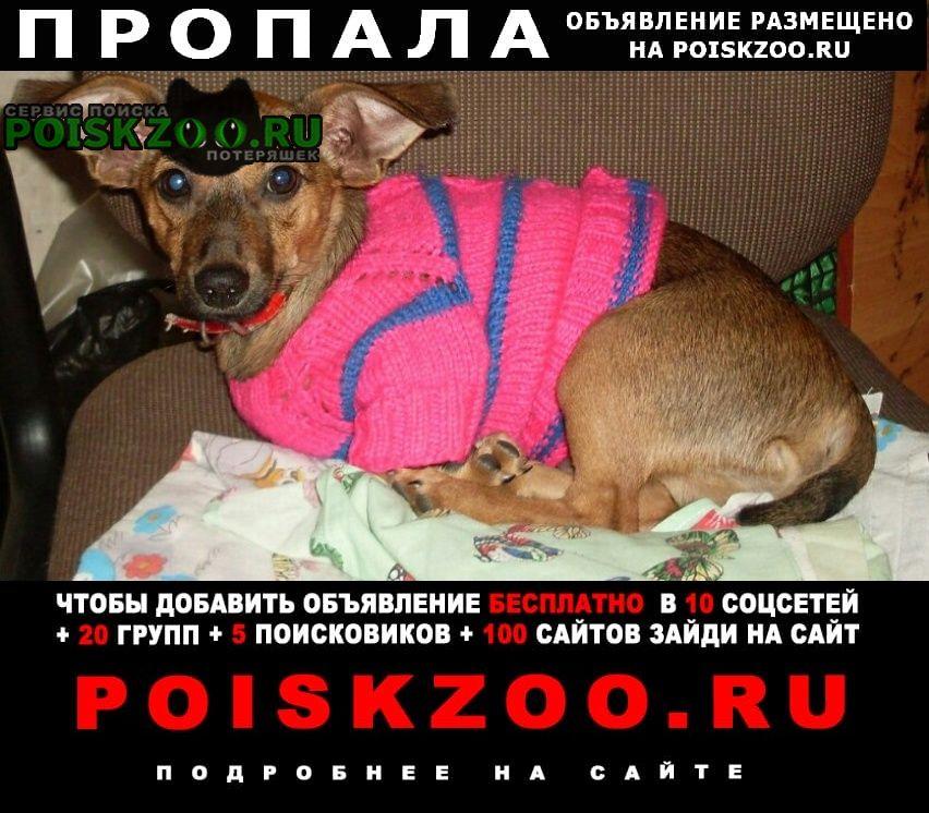 Волгоград Пропала собака кобель пожалуйста помогите
