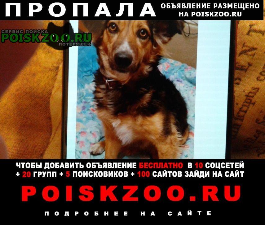 Пропала собака Симферополь