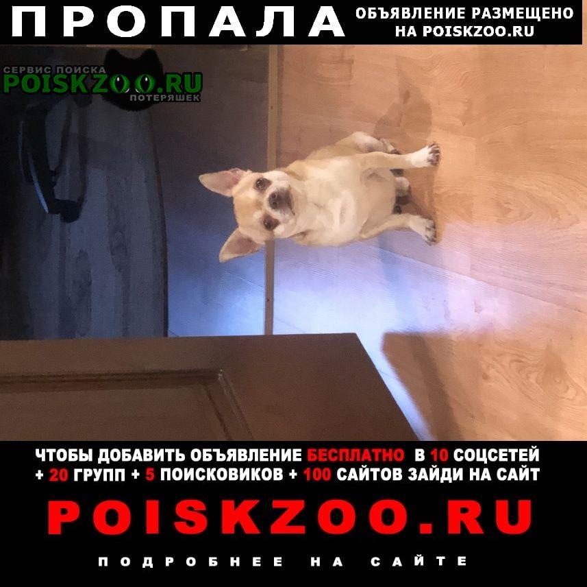 Пропала собака кобель порода чихуахуа Братск