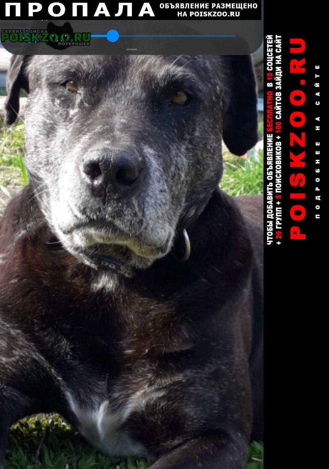 Пропала собака кобель Усолье-Сибирское (Иркутская обл.)