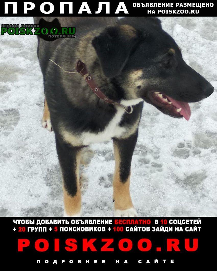 Воскресенск Пропала собака
