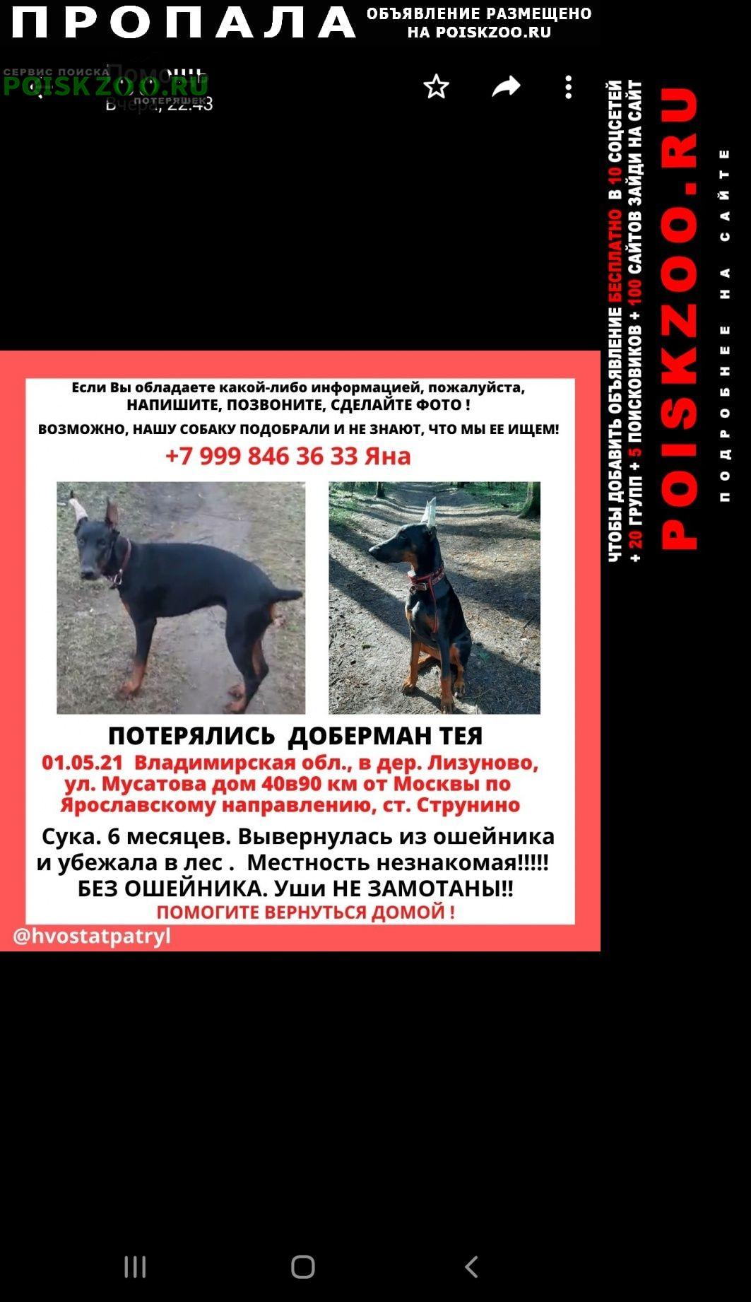 Пропала собака доберман тея Александров