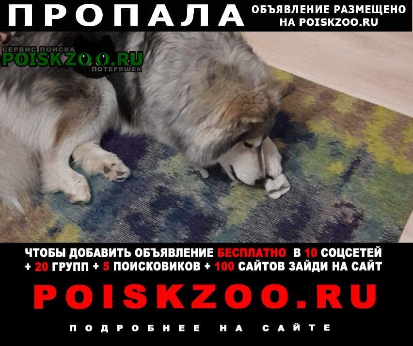 Пропала собака кобель Барнаул